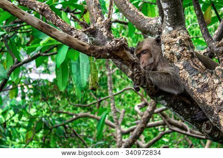The Monkey Slept In The Trees During The Day Time.