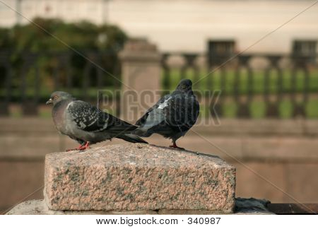 Two Doves On The Granite Stone