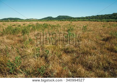 Landscape Of Rural Lowlands Called Pampas With Trees And Dry Bushes All Over The Place Near Cambara