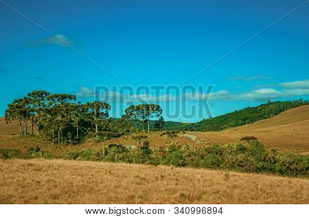 Landscape Of Rural Lowlands Called Pampas With Trees And Dry Bushes Over Hills Near Cambara Do Sul.