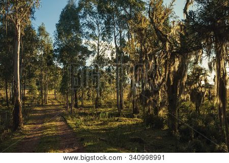 Tree Branches Covered By Lichen And Epiphytes With Wooden Farm Gate On Dirt Pathway At Sunset Near C