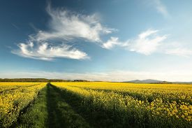 Spring landscape morning sunrise sunset clouds dusk Nature background spring yellow flowers Nature background rural country road Nature background road field Nature background Nature background path Nature background rape field scenic Nature background.