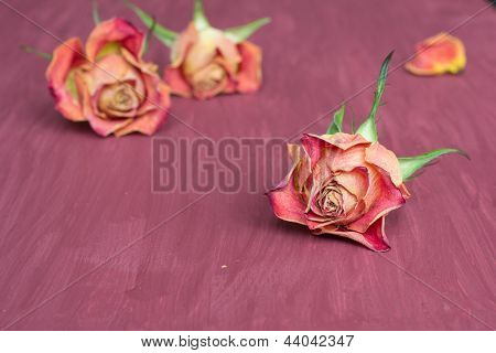 Purple Floral Background With Roses