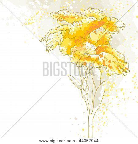 Canna Flower On White Background