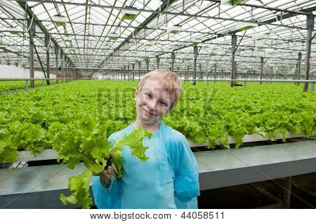 Young Boy Holding Lettuce In Greenhouse