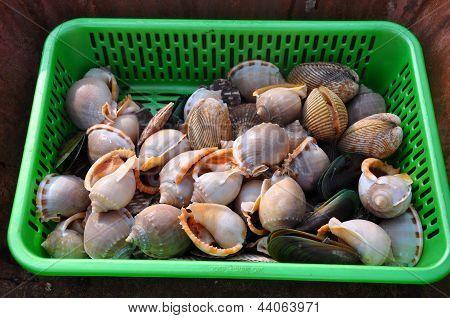 Fresh sea snails at a fish market