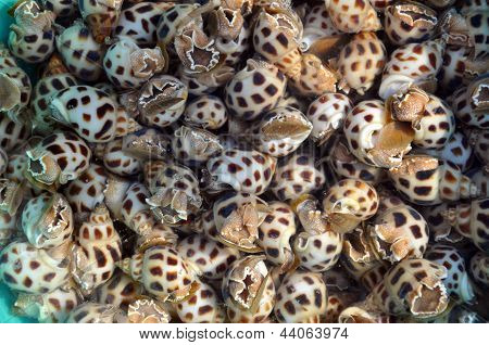 Fresh sea snails in a fish market