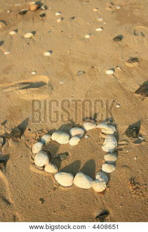 Love Heart Shells