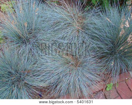 Plant Life Texture