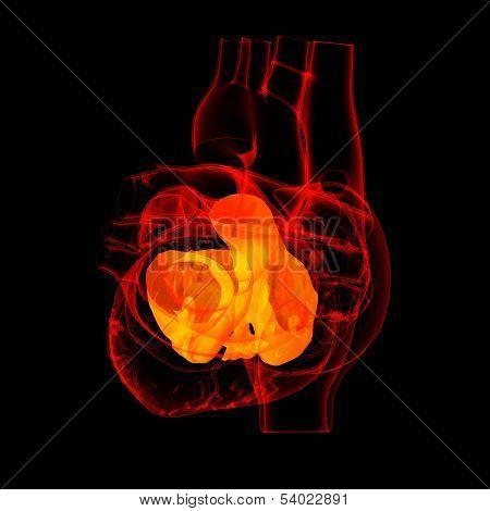 3d render Heart atrium - back view