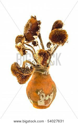 Ancient Aged Clay Jug With Old Dry Yesteryear Sunflower Heads