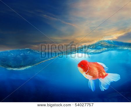 gold fish under blue water with beautiful dramatic sky poster