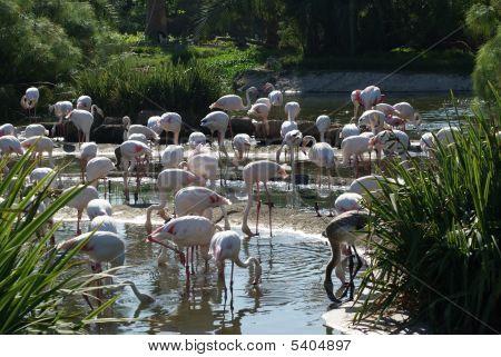 Flamingos At The Wild Animal Park