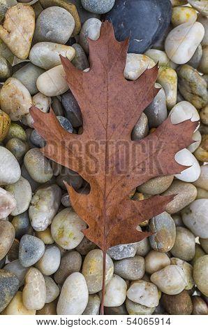 Autumn Leaf And Rocks