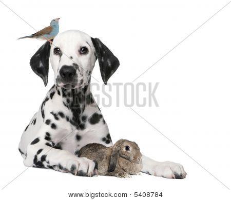 Grupo de animales domésticos: Perro cachorro, aves, conejo