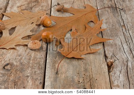 Autumn oak leaves and acorns on the abstract background poster