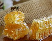 macro shot of honey bee on a honeycomb (natural product) poster
