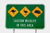 An Australian Wildlife Sign depicting a kangaroo, an emu and an echidna, situated next to the Indian Ocean Road in Western Australia. Presented with a white background. poster