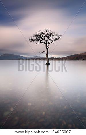 Loch Lomond Tree