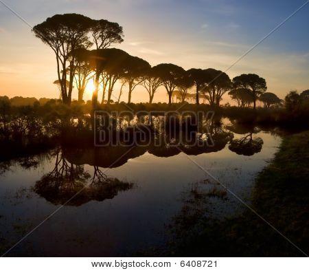 Strophylia Forest At Sunrise