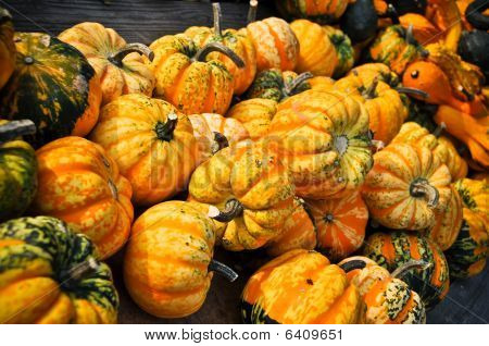 Turban Pumpkins