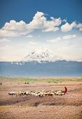 Masai herders  herd  in savannah with a snow covered Mount Kilimanjaro in the background. Tanzania. Africa. poster