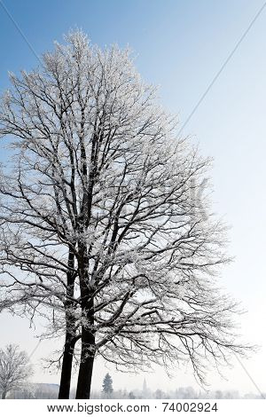 a landscape with frost, frost and snow on tree in winter.