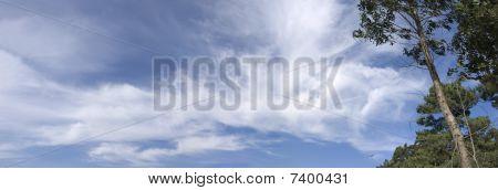 Trees And Sky Panoramic