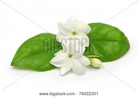 arabian jasmine, jasminum sambac, flower and leaves, jasmine tea flower isolated on white background
