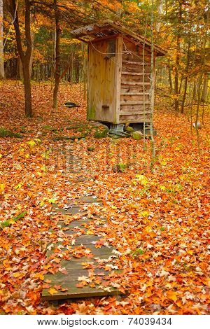 Outbuilding in forest