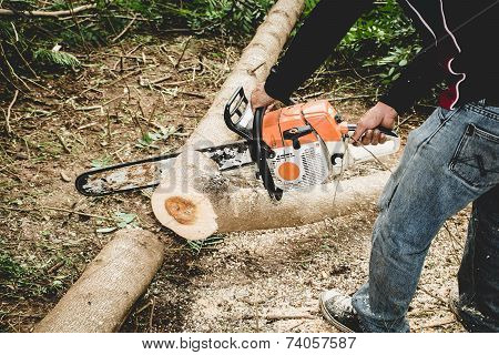 Man Cuts Tree With Chainsaw