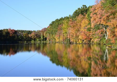 Foliage reflected onto pond with mallard ducks