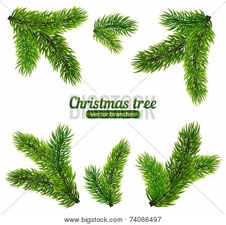 Vector Christmas tree branches