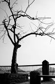 Lonely dull fade scene in winter day in black and white tree shed leaf shape of stone bench fence branch of tree one lonesome concept poster