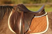 traditional saddle mounted on a brown mare poster