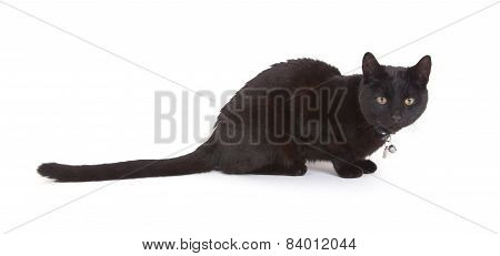 Black Cat Lying Isolated