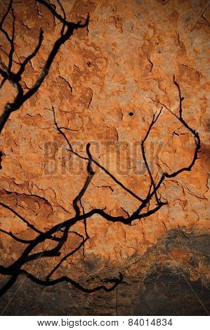 Tree Shadow On Red Rock