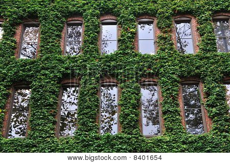 Ivy Covered Office Building