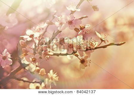 Blooming - flowering tree