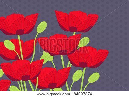 Vintage Poppy illustration