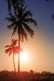 Blue Sky Through Palm Trees On Sutset Background. Vintage Filter