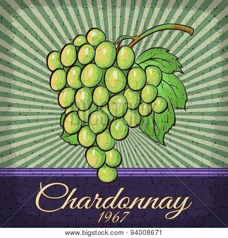 Vintage Chardonnay Grape Poster Design.
