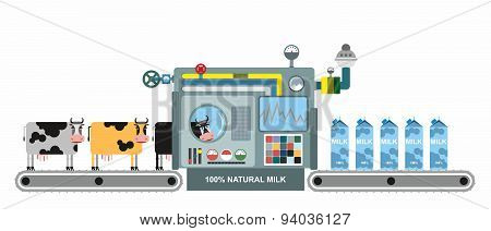 Infographics  milk production. Stages of milk production from cows. Conveyor belt with cows. Natural