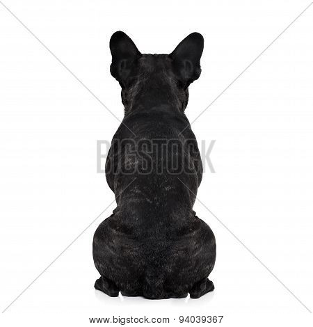 Dog Back Torso