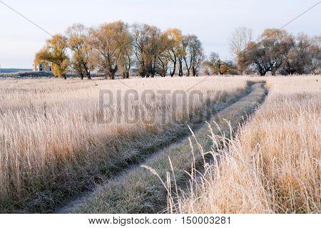 Grove In Autumn