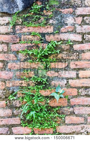 Fern living on cracked concrete bricks wall
