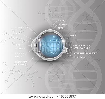 Normal eye anatomy scientific DNA chain background
