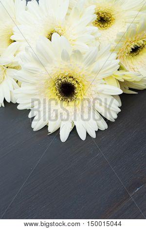 Beige fresh gerbera flowers border on dark wooden table close up