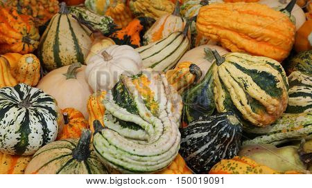 Many Small Decorative Pumpkins  For Sale At The Greengrocer