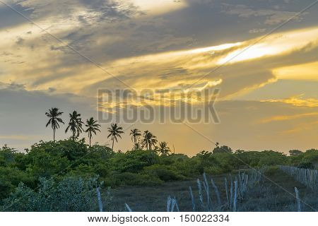 Palm Trees And Sunset Sky Jericoacoara Brazil